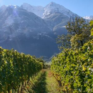 Petite Arvine: The Best Grape You've Probably Never Heard Of