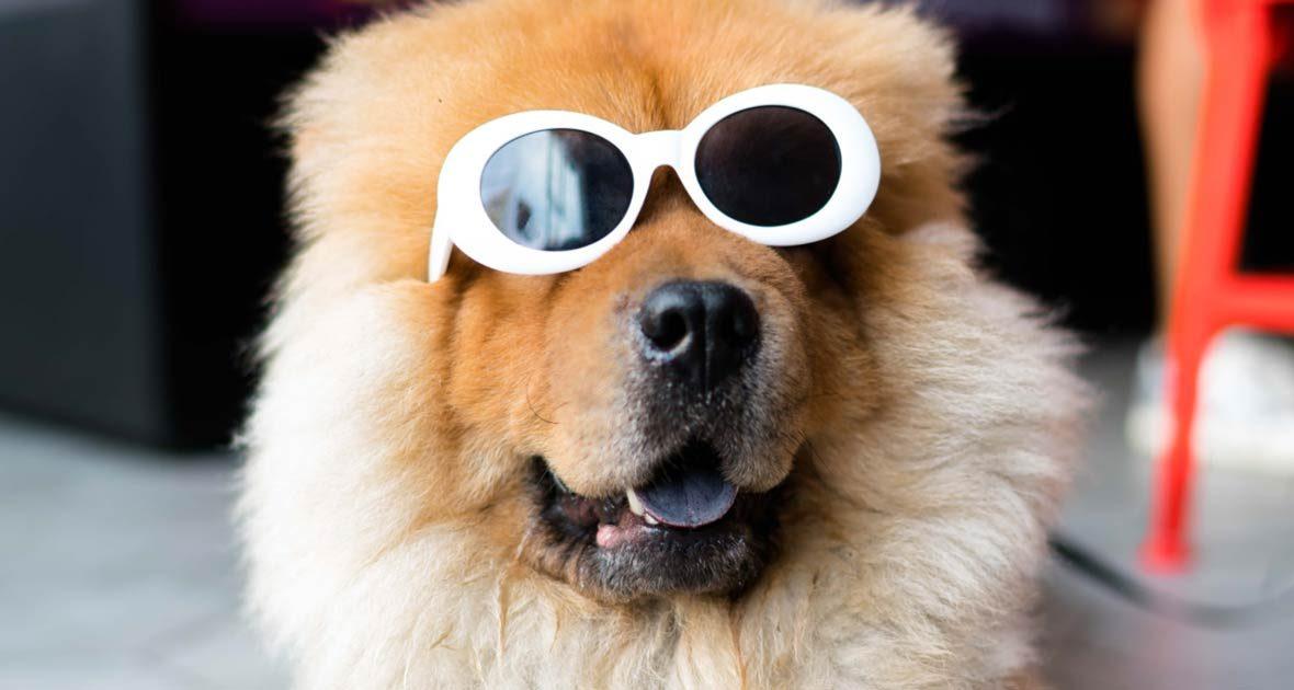 dog-with-sunglasses-1180