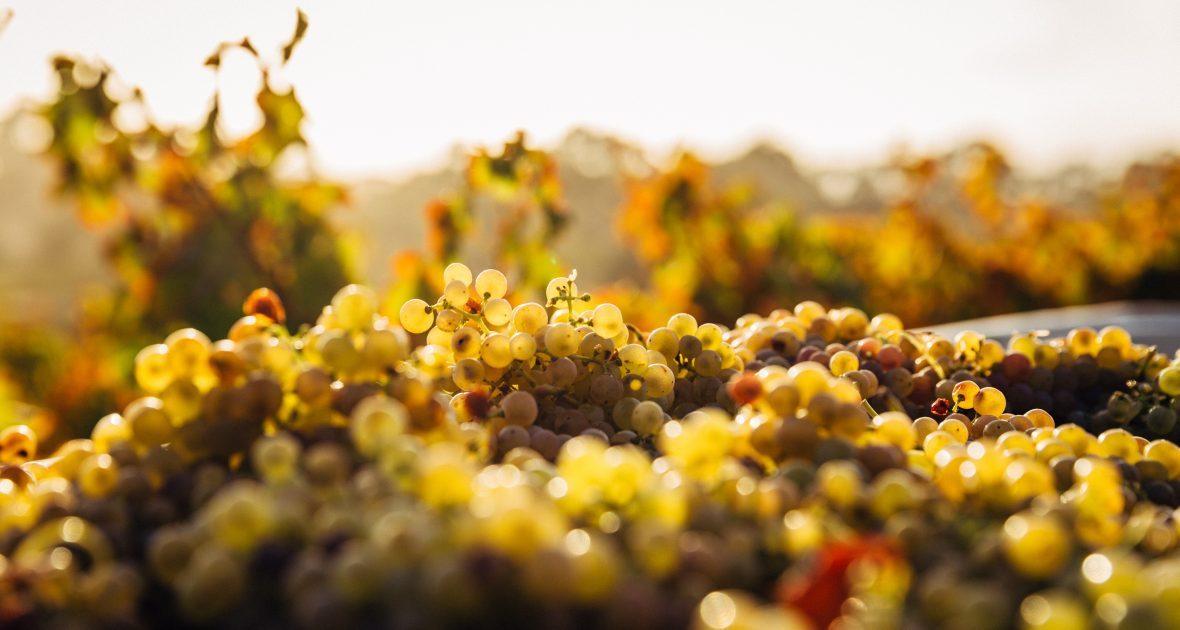 new_aus_wines