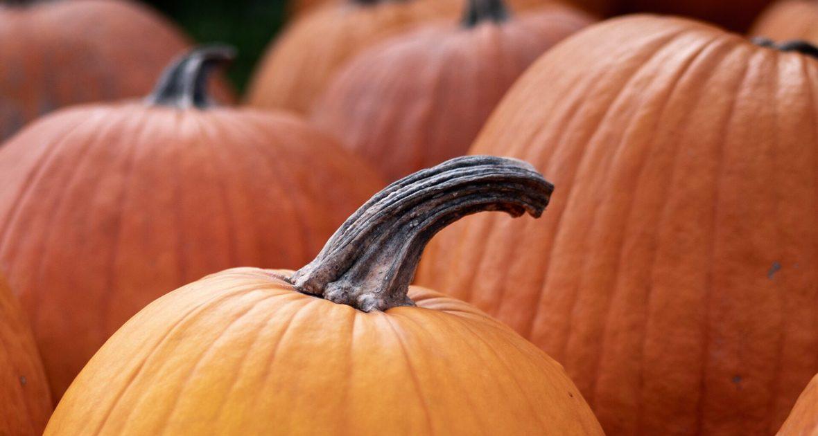 pumpkins-1180